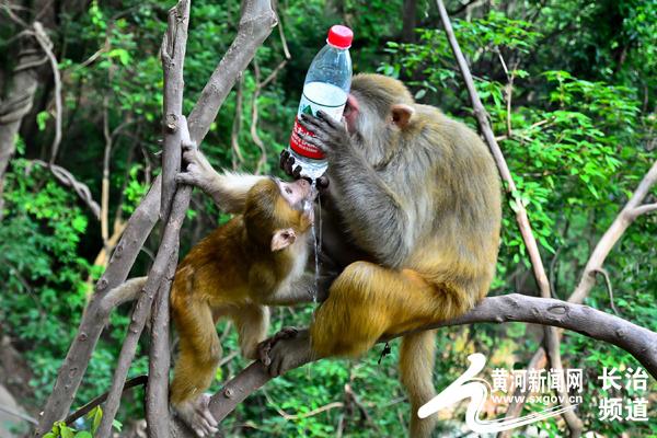 矿泉水瓶手工制作大全 动物